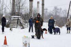 Wettbewerb für Hunde Stockbild