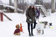 Wettbewerb für Hunde, der Spaß beginnt im Winter, redaktionell Stockbilder