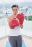 Wettbewerbsfähiger sportlicher Brunette, der rote Boxhandschuhe trägt Lizenzfreie Stockfotografie