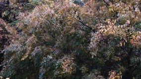 Wetter des starken Winds der Regenbäume stock footage