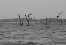 Wewa sjö i den Kaudulla nationalparken Arkivfoto