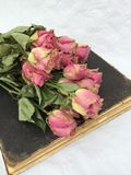 Wewnętrzna dekoracja: suche róże na starej brąz książce obrazy stock