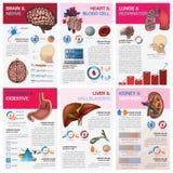 Wewnętrzni Ludzkiego organu zdrowie Infographi I Medyczny mapa diagram Zdjęcia Stock
