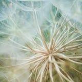 Wewnętrzny świat Makro- dandelion zdjęcie royalty free