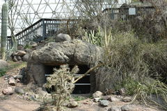 Wewnętrzny widok biosfera 2 zdjęcia stock