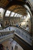 Wewnętrzny widok historii naturalnej muzeum Zdjęcia Stock