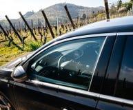 Wewnętrzny widok nowy Peugeot 306 samochód parkował wiejską drogę zdjęcie stock