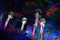 Wewnętrzny meduse Zdjęcie Royalty Free