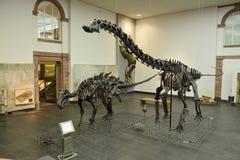 Wewnętrzny widok Senckenberg muzeum w Frankfurt Zdjęcia Stock