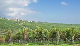 Weyher,german Wine Route,Germany Stock Images