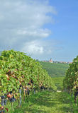 Weyher,german Wine Route,Germany Royalty Free Stock Photography