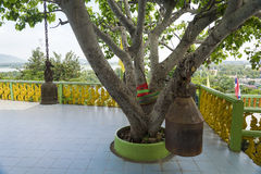 Wezwania drzewo zdjęcia royalty free