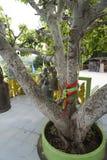 Wezwania drzewo fotografia royalty free