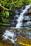 WF Somersby Branch Vert. Colourful evergreen wet jungles around Somersby waterfall of Australian central coast. Flowing blurred water stream falls down from Royalty Free Stock Images