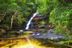WF somersby pool reflect trees. Lush evergreen rain-forest around somersby waterfall cascade. Blurred streaming water falls down the sandstone cliff reflecting Royalty Free Stock Photography