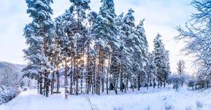 Wh do frio das montanhas da árvore da árvore de Natal do russo da neve da natureza do inverno Foto de Stock Royalty Free