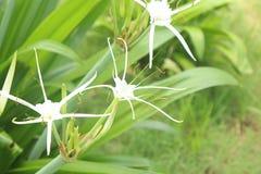 Whait bloeit groene achtergrond onder zonlicht Stock Foto's