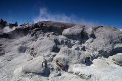 Whakarewarewa dal av Geysers Nya Zelandiiya Geotermalny Rese Royaltyfria Foton