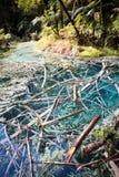 Whakarewarewa Lasowi Acidic baseny zdjęcia royalty free