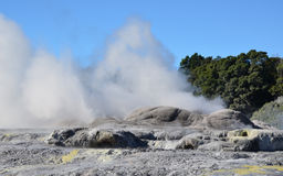 Whakarewarewa-Tal von Geysiren in neuem Zelandii Geotermalny-Park Stockfotos