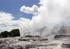 Whakarewarewa thermal geyser area Stock Photography