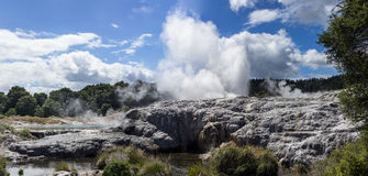 Whakarewarewa thermal geyser area Royalty Free Stock Images