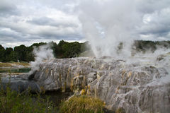 The Whakarewarewa Thermal Valley - Te Puia. The Pohutu Geyser in the Whakarewarewa Thermal Valley - Te Puia Stock Photo