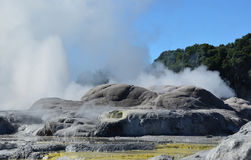 Whakarewarewa Valley of Geysers. New Zelandiiya.Geotermalny park Stock Photo