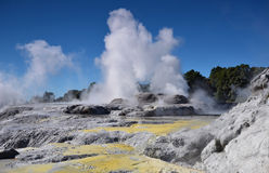 Whakarewarewa Valley of Geysers. New Zelandiiya.Geotermalny park Royalty Free Stock Photo