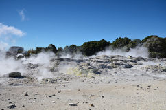 Whakarewarewa Valley of Geysers. New Zelandiiya.Geotermalny Rese Stock Photos
