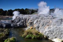 Whakarewarewavallei van Geisers in Nieuwe Zelandii Geotermalnypark Stock Afbeelding