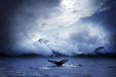 Whale. A humpback whale in a stormy sea royalty free stock photos