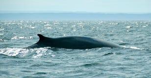 Whale Stock Photo
