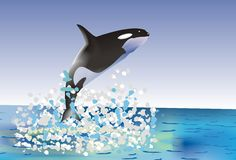 Whale. The whale leaping out of the water Royalty Free Stock Photo
