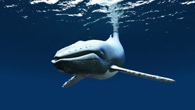Whale. Image of the swimming whale Stock Photos