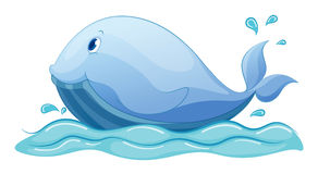 Whale Royalty Free Stock Photo