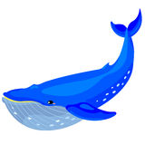 Whale Stock Image