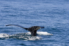 Whale Stock Images