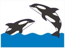 Whale. Illustration animal ocean nature Stock Image