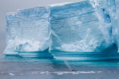 Whale - Antarctic Peninsula - Tabular Iceberg in Bransfield Stra Royalty Free Stock Images