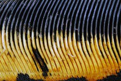 Whale baleen. Yellow and black whale baleen (whale teeth) found in Washington stock photos