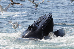 Whale. And birds in ocean stock image