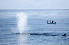 The whale is blowing! Royalty Free Stock Photo