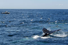 Whale and Boat Stock Image