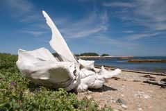 Whale Bone 2 Royalty Free Stock Photos