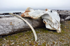 Whale bone at Isfjord Radio, Kapp Linne, Spitsbergen. Royalty Free Stock Image