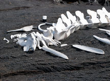 Whale bone remains Royalty Free Stock Photography