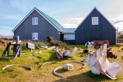 Whale bones in Djúpalónssandur museum, Iceland Royalty Free Stock Image