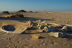 Whale bones, Meob Bay whaling station, Namibia, Africa royalty free stock photos