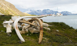 Whale Bones - South Georgian Whaling Station Royalty Free Stock Photos